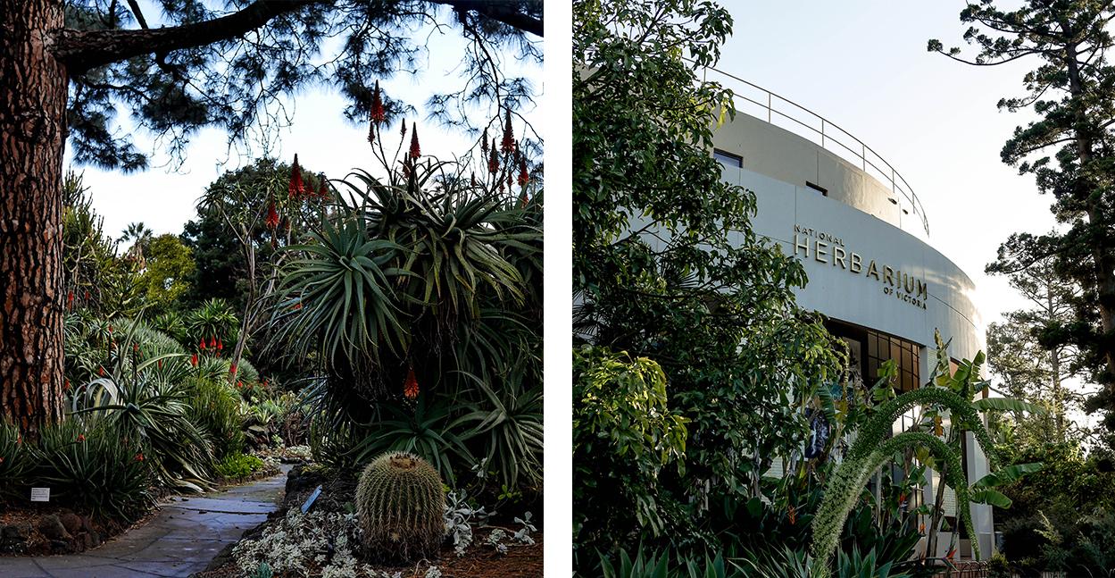 melbourne-roadtrip-voyage-royal-botanic-garden-plante-tropicale