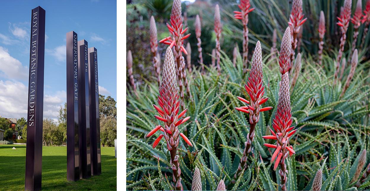 melbourne-roadtrip-voyage-viste-royal-botanic-garden