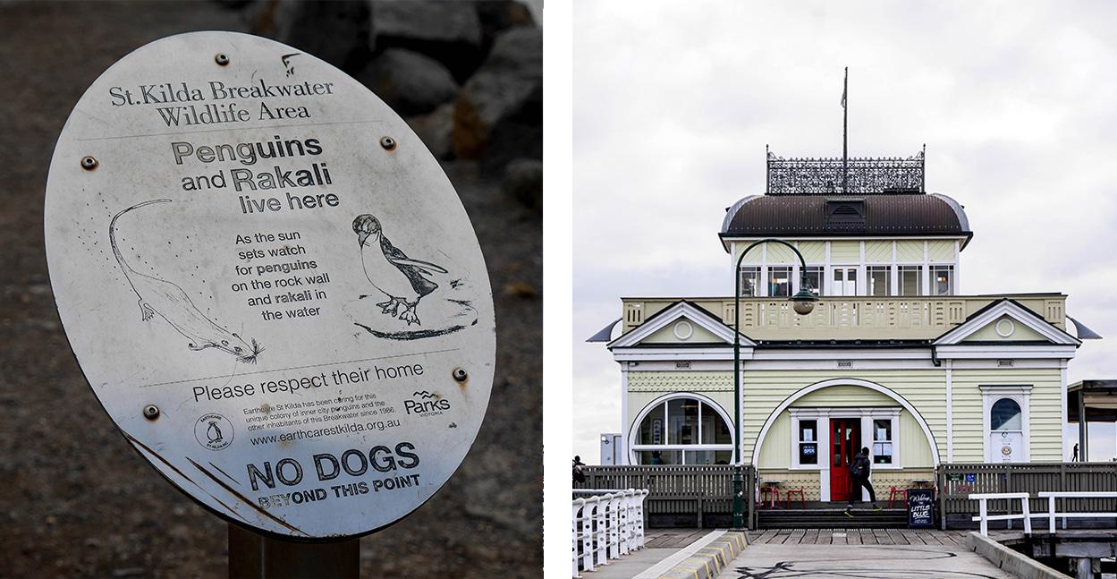 melbourne-roadtrip-voyage-pingouin-saint-kilda