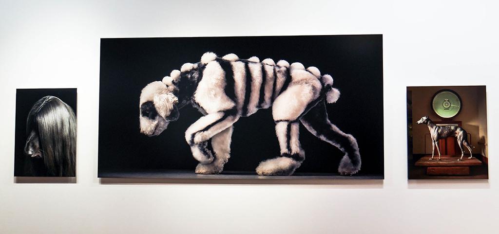 10-dog-gods-tim-flach-stenope-nicephore-exposition-animaleries-clermont-ferrand-auvergne