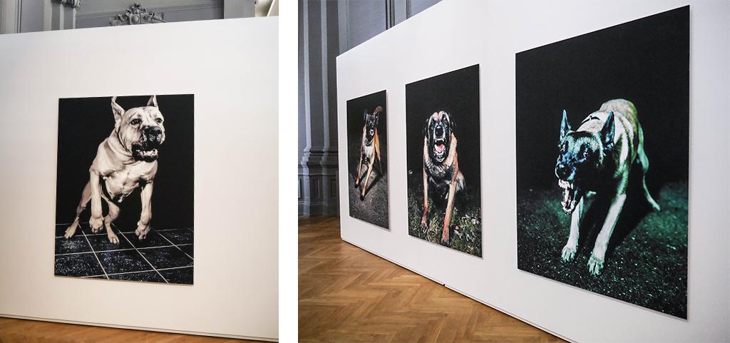 11-les-chiens-tina-merandon-stenope-nicephore-exposition-animaleries-clermont-ferrand-auvergne-recupere