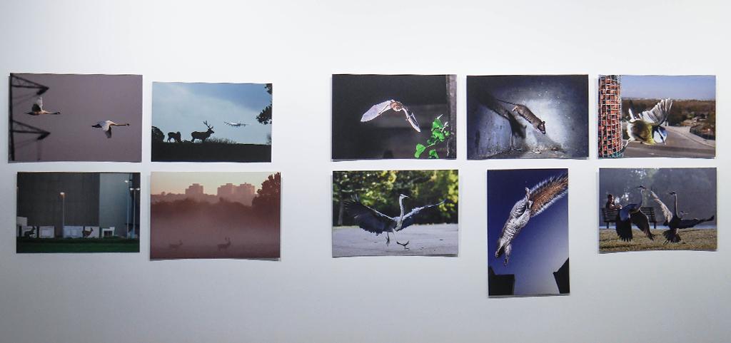 25-safari-urbain-laurent-geslin-stenope-nicephore-exposition-animaleries-clermont-ferrand-auvergne-recupere