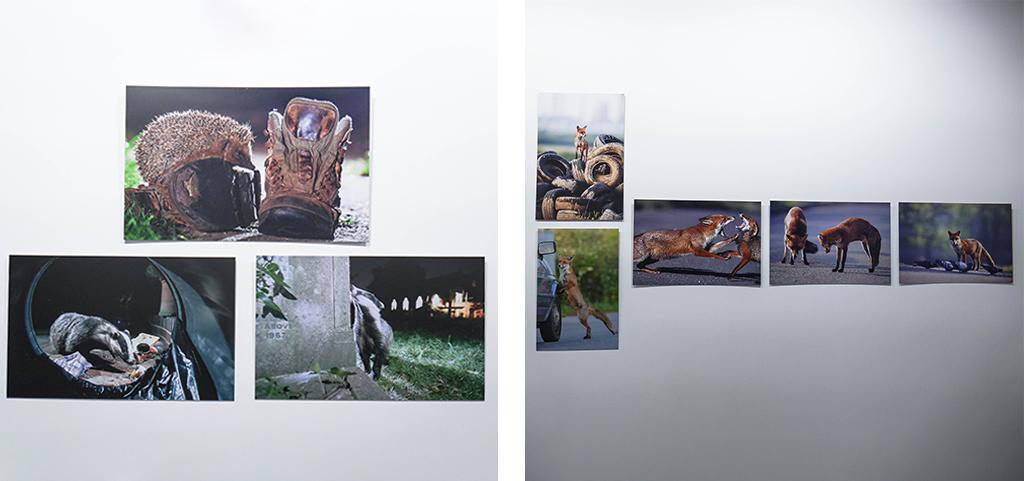 27-safari-urbain-laurent-geslin-stenope-nicephore-exposition-animaleries-clermont-ferrand-auvergne-recupere
