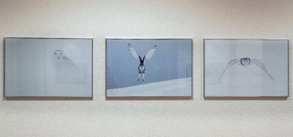 3-solitudes-animales-vincen-munier-stenope-nicephore-exposition-animaleries-clermont-ferrand-auvergne