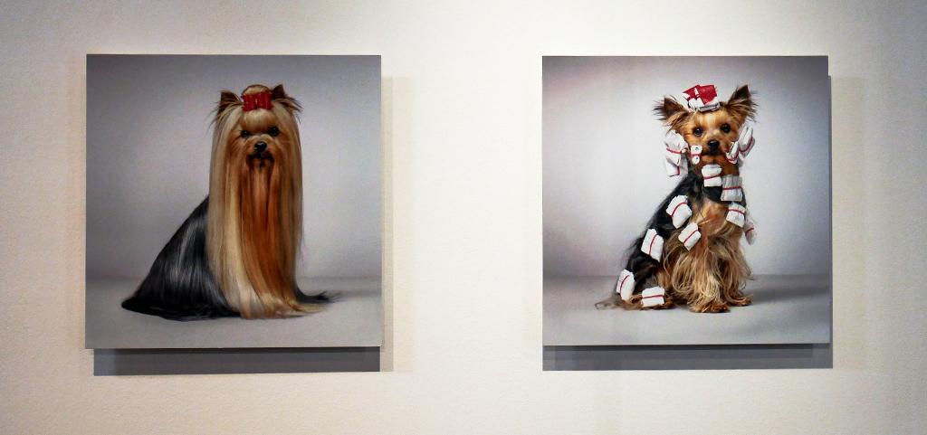 9-2-dog-gods-tim-flach-stenope-nicephore-exposition-animaleries-clermont-ferrand-auvergne