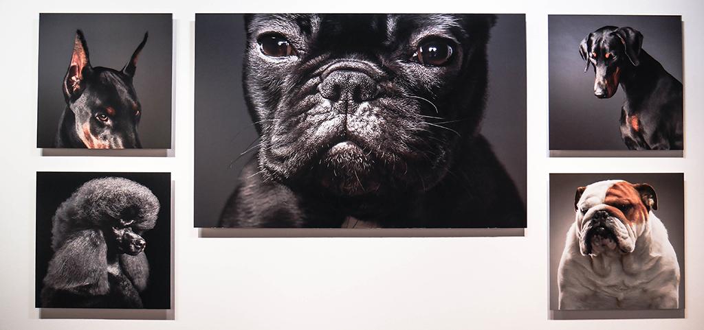 9-dog-gods-tim-flach-stenope-nicephore-exposition-animaleries-clermont-ferrand-auvergne