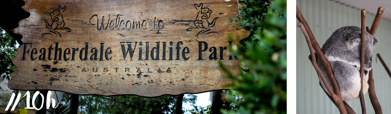 featherdale-wildlife-park-sydney-blog-voyage-visite-cityguide
