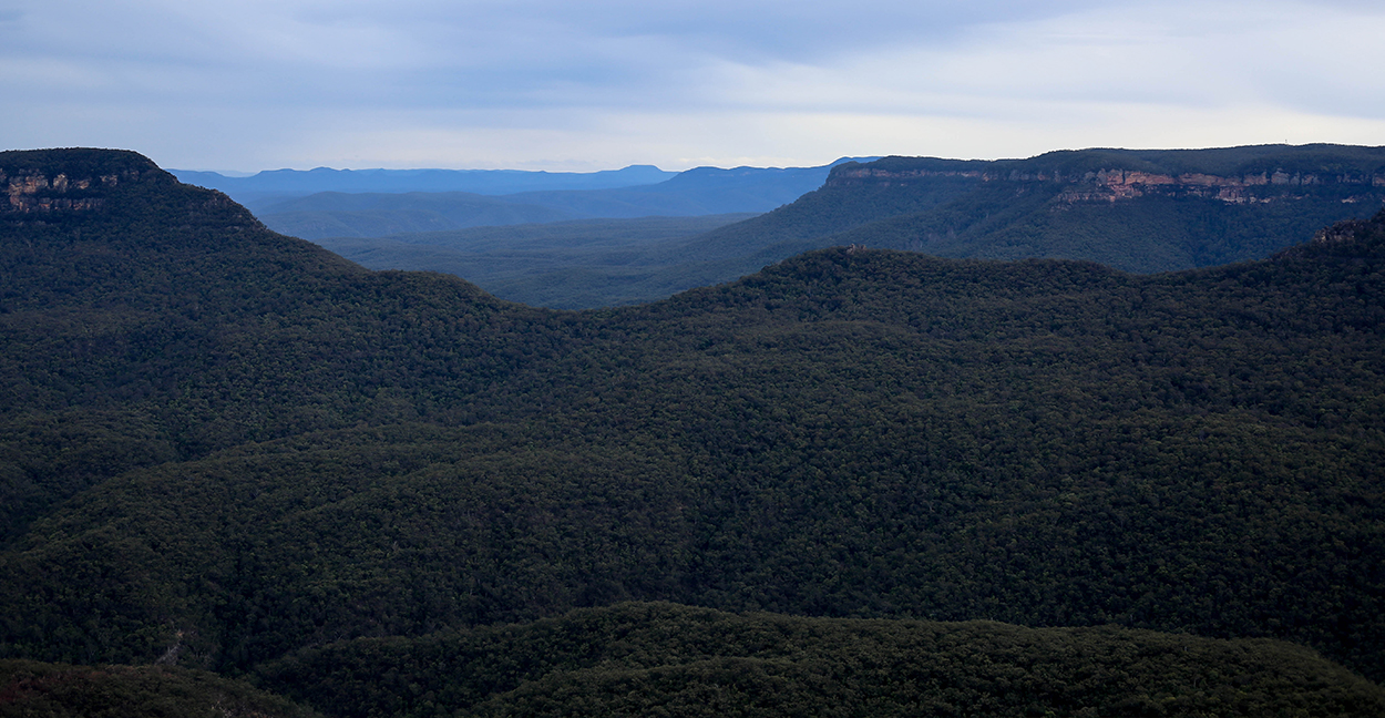 foret-blue-mountains-australie-voyage-blogtrip