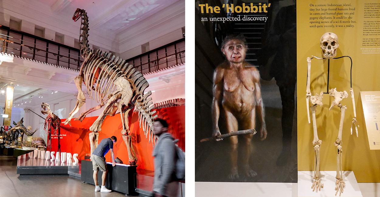 musee-hobbit-dinosaure-sydney-roadtrip-voyage
