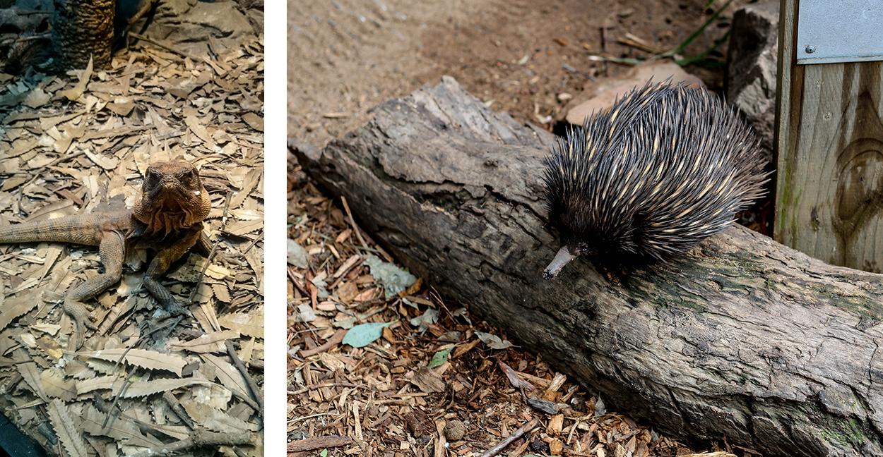 animaux-bizarres-australie-sydney-roadtrip-voyage