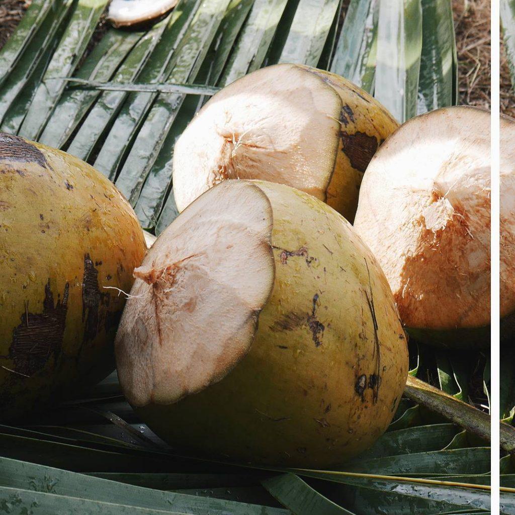 Noix de coco frachement descendues des cocotiers ! Eau dehellip